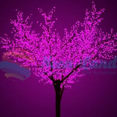 Деревья «Сакура»